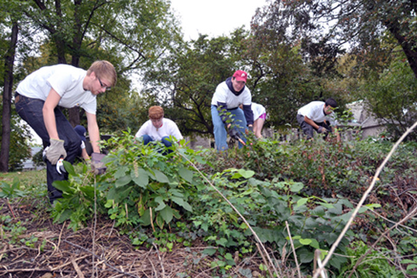 Students clearing weeds