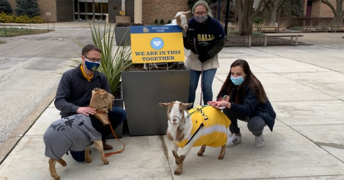 Image of goats from the Philly Goat Project on the La Salle University campus