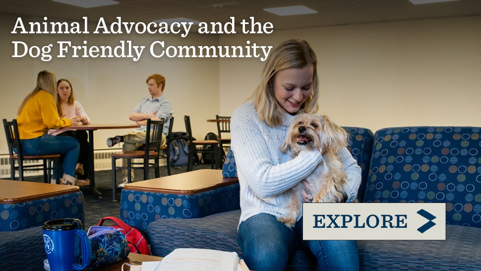 Animal Advocacy and the Dog Friendly Community